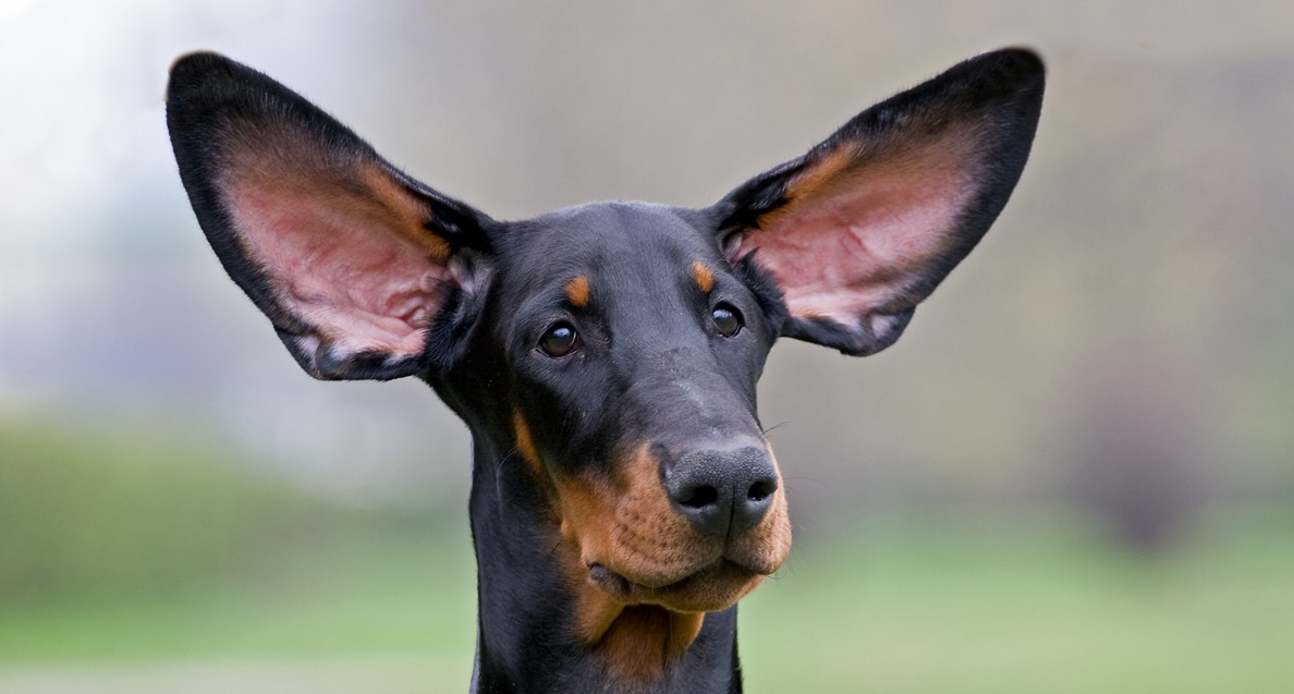 Handling objections - image of confused dog